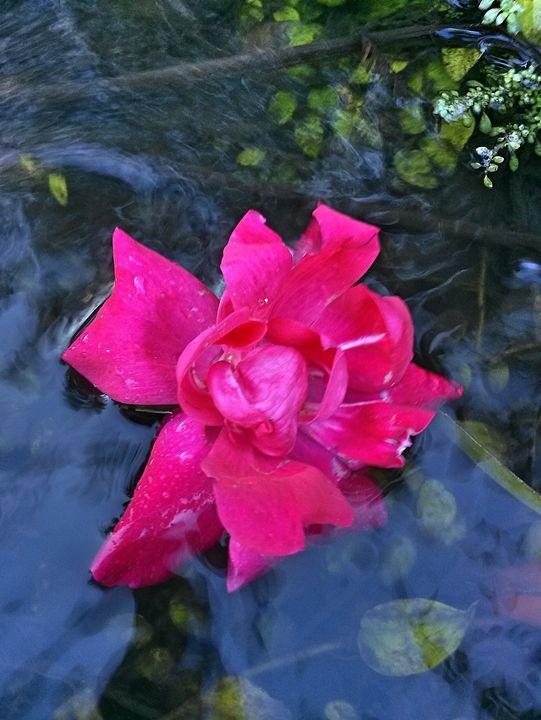 Floating flower - S.Lane