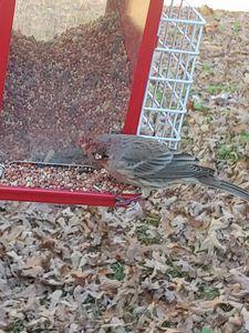 Hurt bird