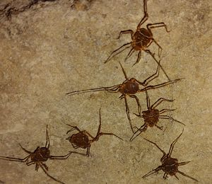 Spiders I found
