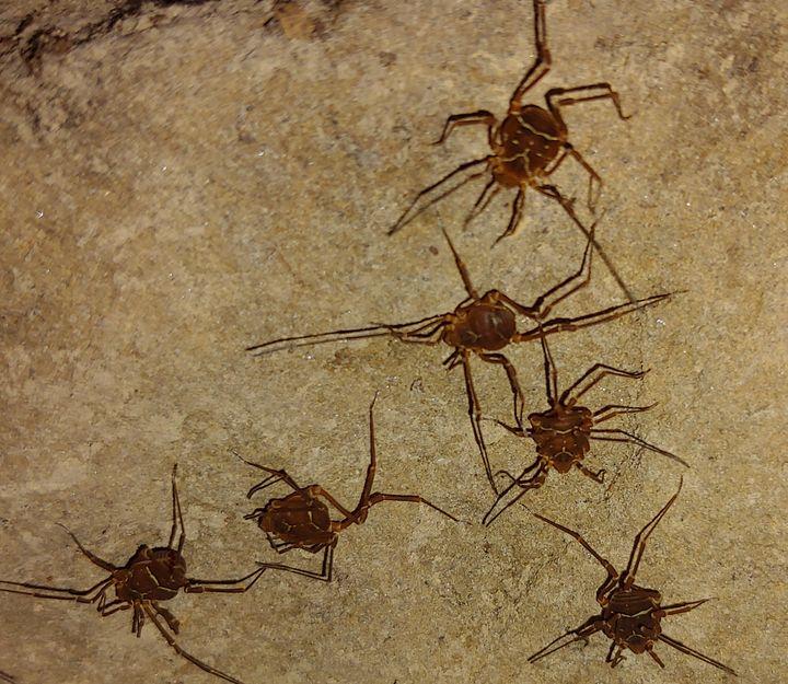 Spiders I found - Amanda
