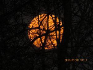 Orange moon - Amanda