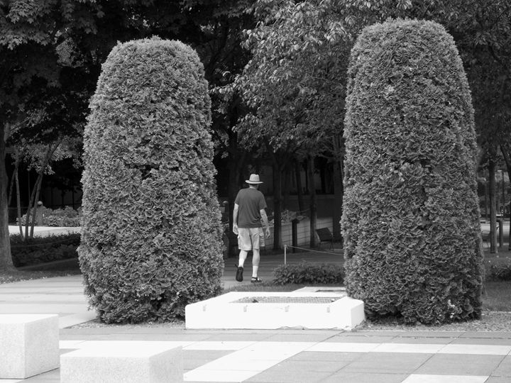 WALK THOUGH THE GARDEN - Dylan T.