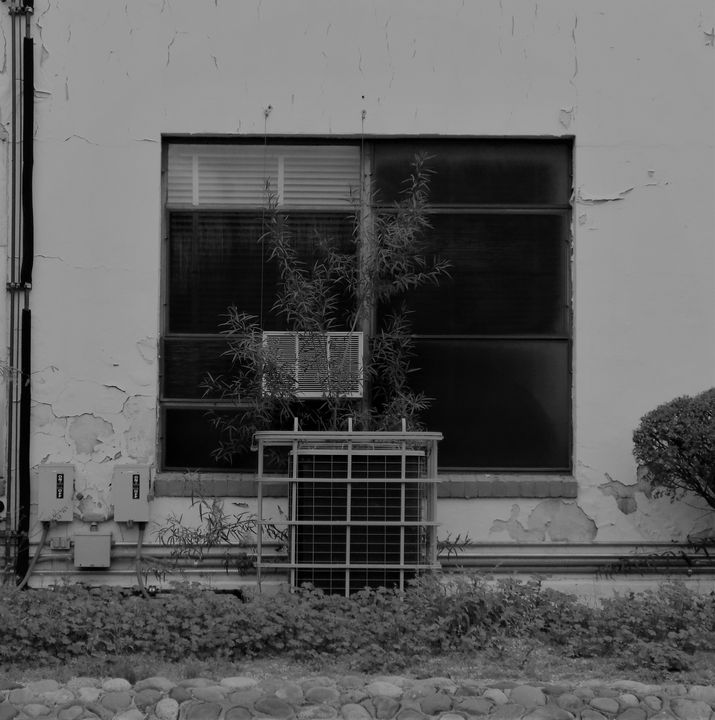 WINDOW ONE - Dylan McGarry