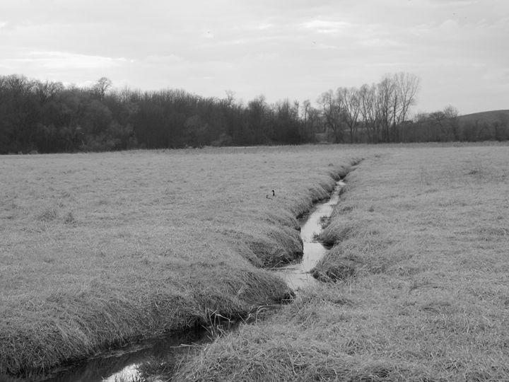 Creek - Dylan McGarry