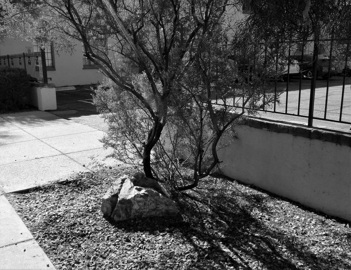 ROCK TO TREE - Dylan McGarry