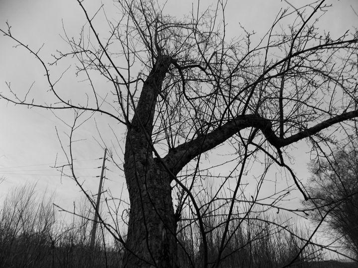 REACH - Dylan McGarry