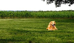 Jasmine in the Grass