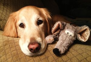 A Golden and her Mouse - J. Satterstrom Designs