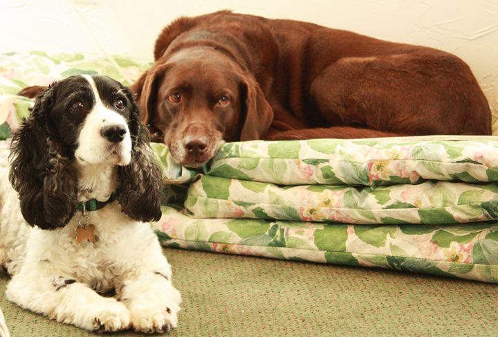 """""""Best Friends"""" Molly and Ginger - J. Satterstrom Designs"""