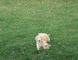 Golden in the Grass