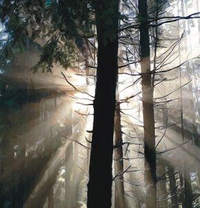 Shadowed Sentinels of Stanley Park