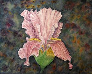 Iris Magnificent