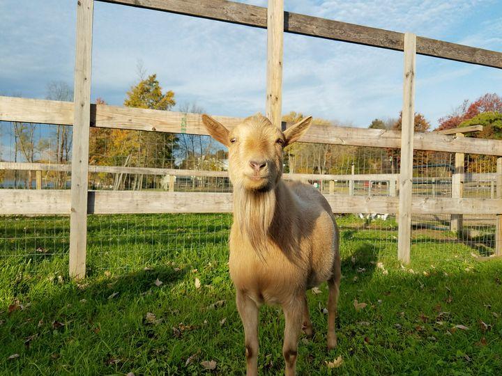 Hi! - Animals Around the World