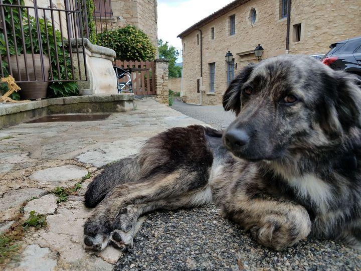 dog in Provence - Animals Around the World