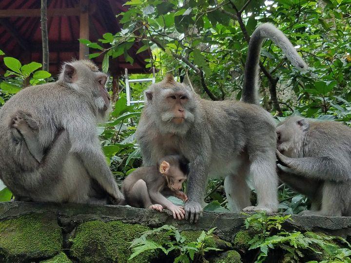 activities - Animals Around the World