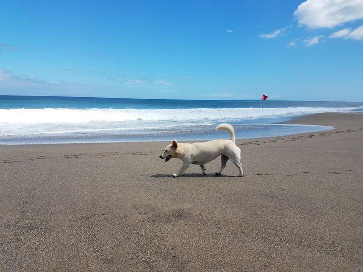 walking - Animals Around the World