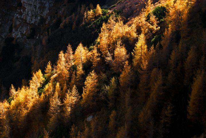 Autumn forest - Adilena