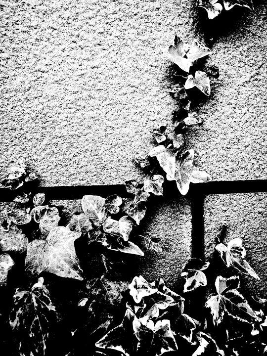 ivy petrified - Novo Weimar