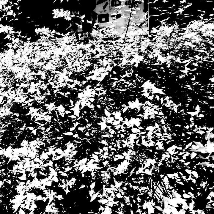 Reality on Pixel #BW0000959 - Novo Weimar