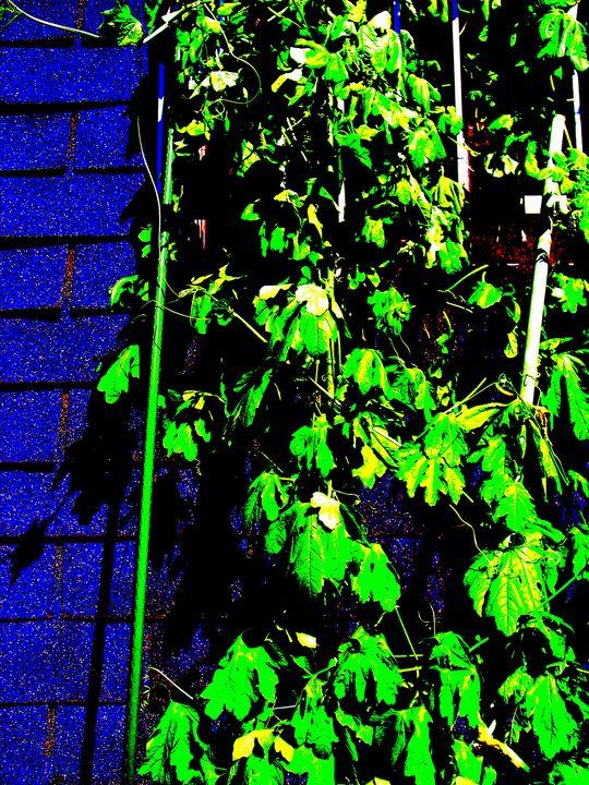 Blue in Green - Novo Weimar