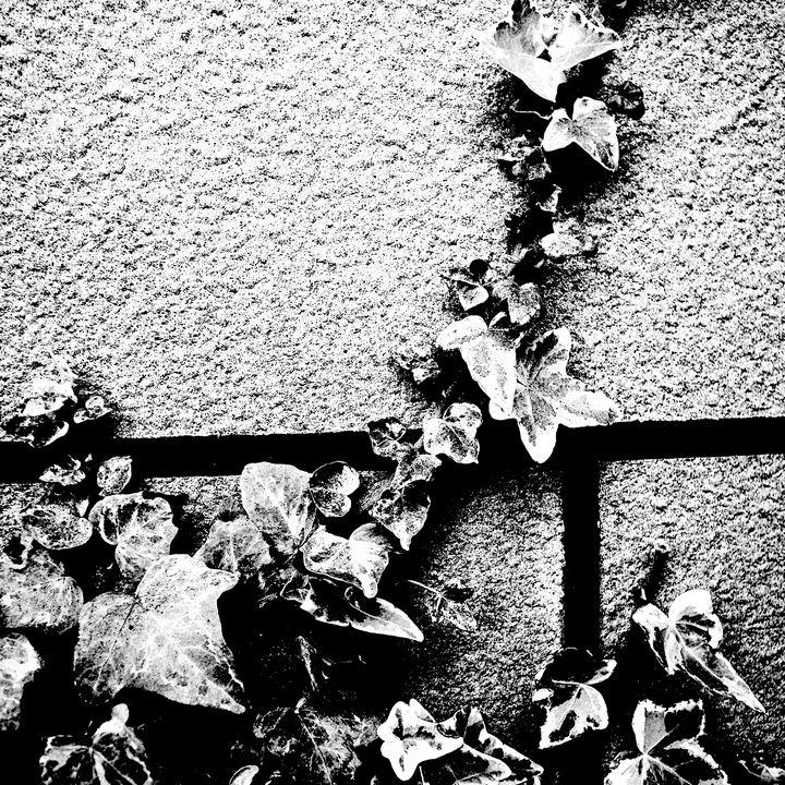 Reality on Pixel #BW0000005 - Novo Weimar