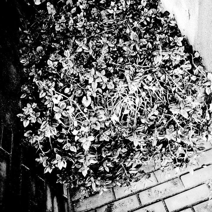 Reality on Pixel #BW0000014 - Novo Weimar