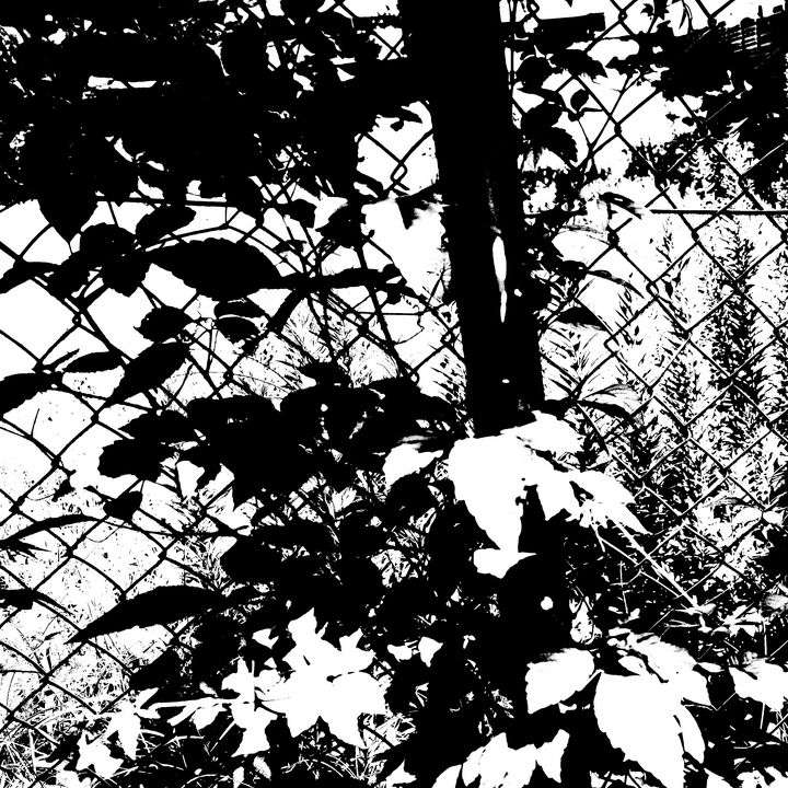 Reality on Pixel #BW0000392 - Novo Weimar