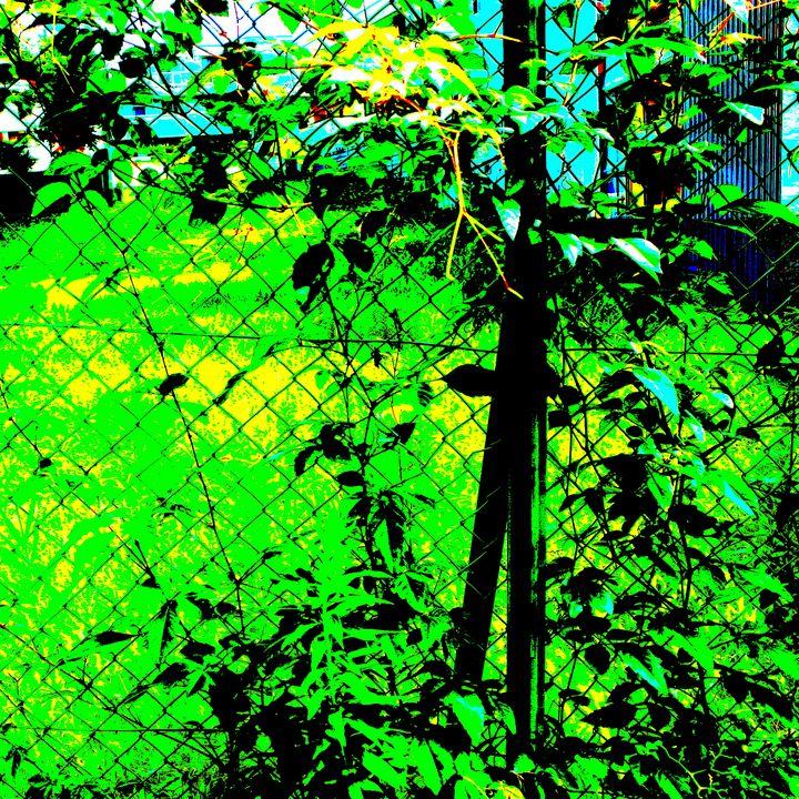 Reality on Pixel #CL0000412 - Novo Weimar