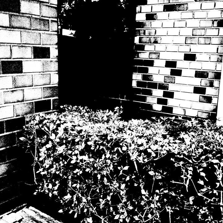 Reality on Pixel #BW0000425 - Novo Weimar