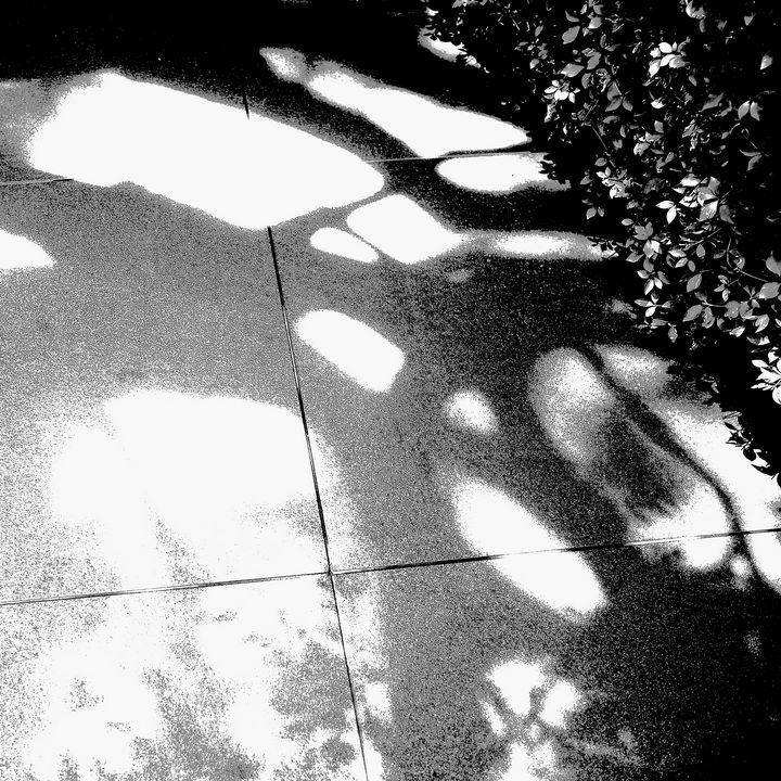 Reality on Pixel #BW0000454 - Novo Weimar