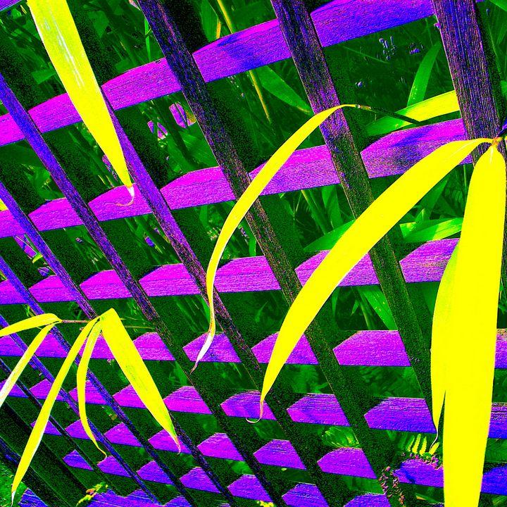 Reality on Pixel #CL0000522 - Novo Weimar