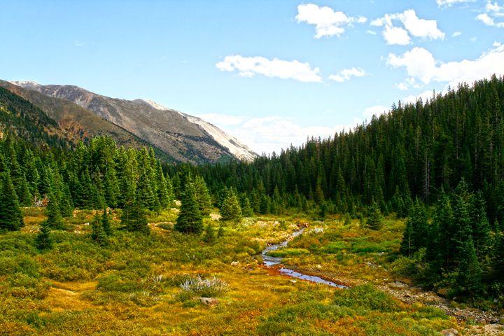 Mountain Meadow Spotlight - Donna Golden Photography & Design