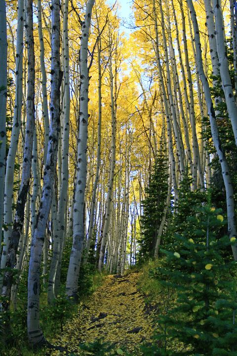 Aspen Trail - Donna Golden Photography & Design
