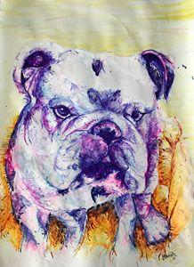 British Bulldog 2 - Dave Brown
