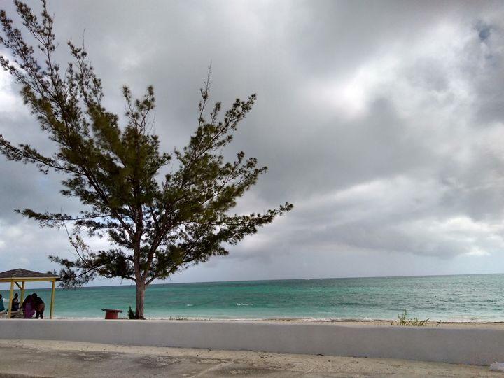 Lone Tree on a cloudy day - Kaye's Kreations