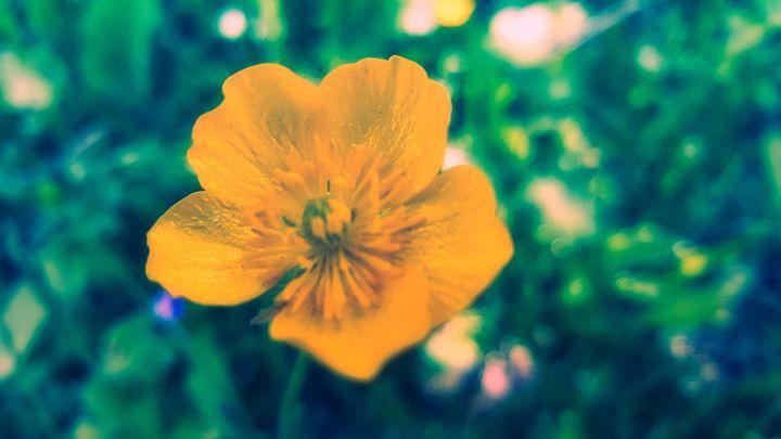 Yellow Flower - First Shot - BlockedGravity