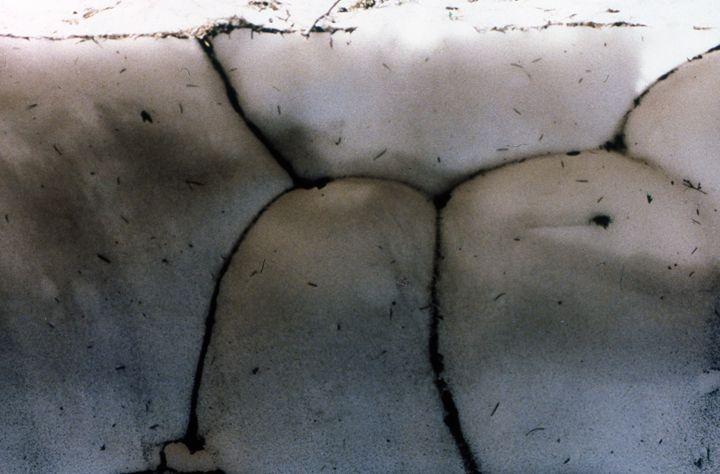 """Snow Tits"" - Margaret Havins"
