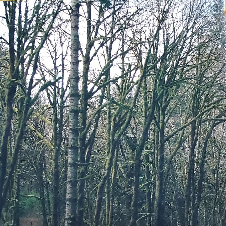 Moss on Trees - ArtByDonKats