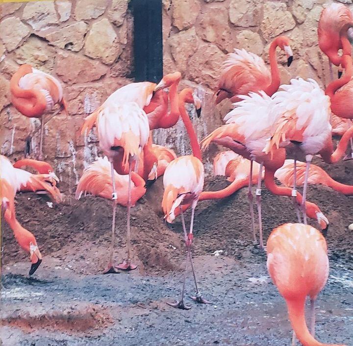 Zoo Flamingos - ArtByDonKats