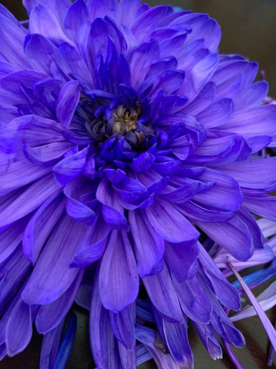 flower fun - Hannah