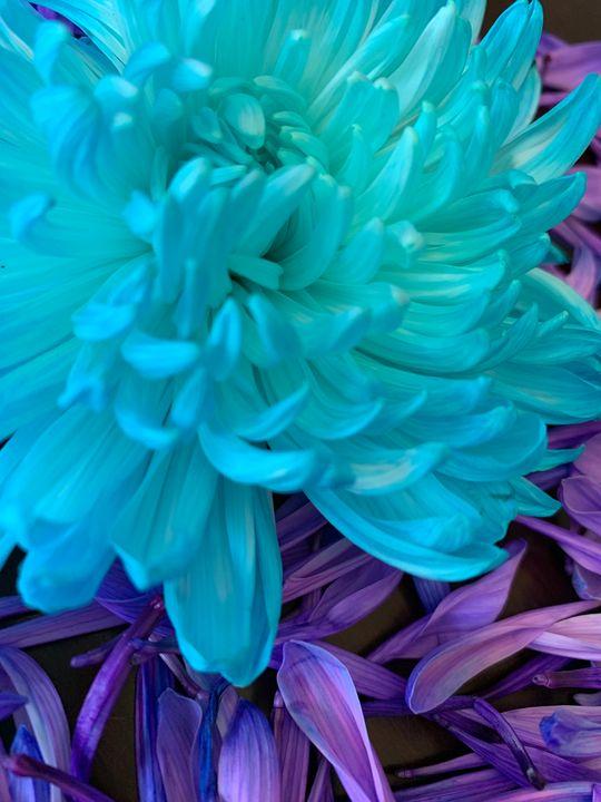 Beautiful flower - Hannah
