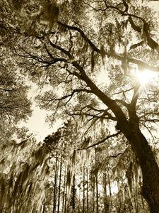 Earthy Shades of Serenity