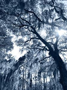 Blue Shades of Serenity