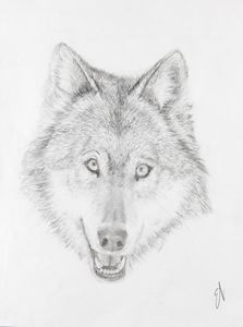 Wolf Head Drawing