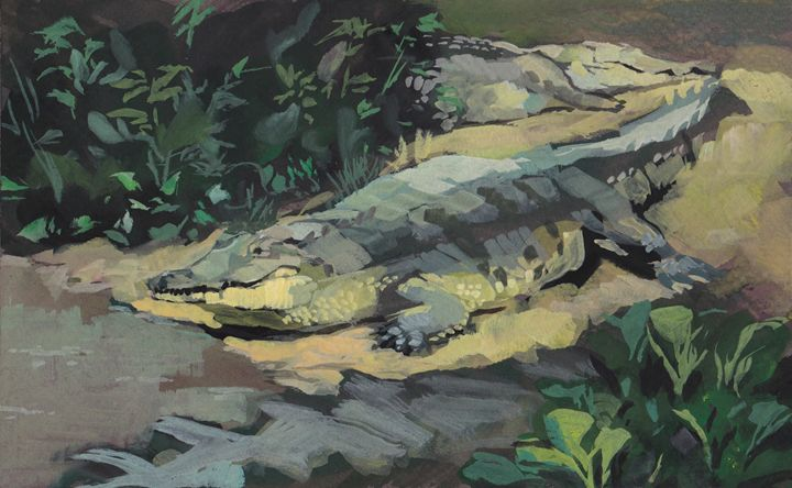 Orinoco crocodile - Romeroleo