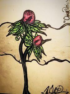 """Opium Poppies"""