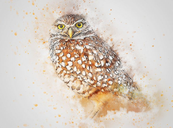 Owl - High quality Art
