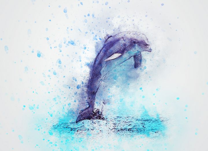 Jumping Dolphin - High quality Art