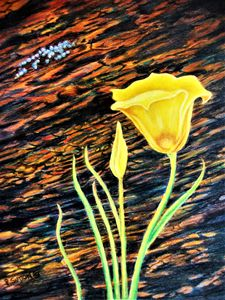 MARIPOSA LILY WITH LIKEN - PamSutton
