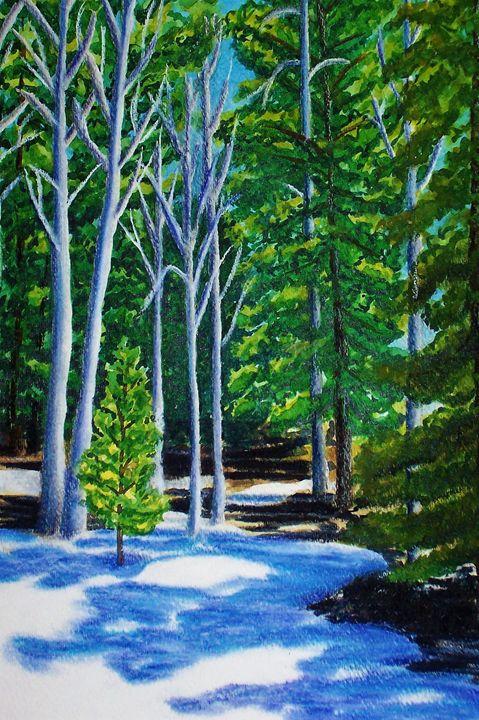 FOREST SHADOWS - PamSutton